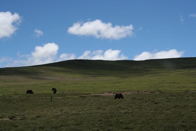 tibete11