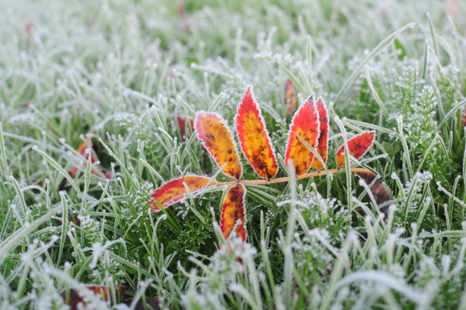 frost (18)